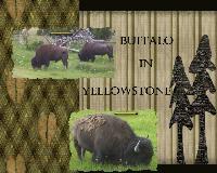 Buffalo in Yellowstone