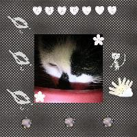 Charlie Cat