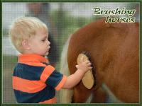 Ian & the horse