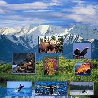 Wild Life and Marine Life of Alaska