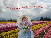 tulips angel