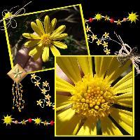 Flower in Yellow