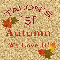 Talon's First Autumn