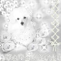 all white challenge