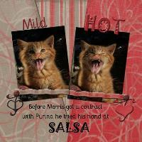 Salsa - Caption These Kittens Challenge