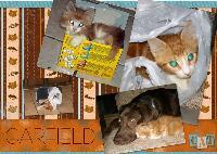 Garfield, the Crazy Cat