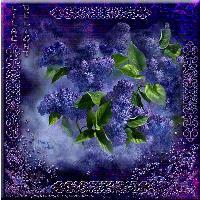 penny Parker lilac delight