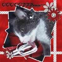OOOPppps Cat