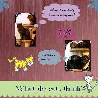 Cats Thoughts
