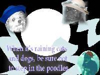 raining cats dogs