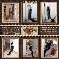 Kitty Caper