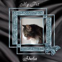 Sheba - My Pet