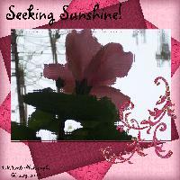 Seeking Sunshine Photo Effect Challenge