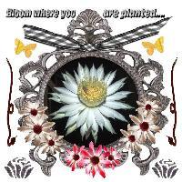 Flower, Frame, words
