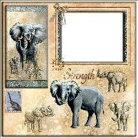 QP Elephant 2