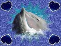dolphin'slove