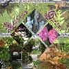 Ameliia's Garden