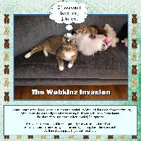 The Webkinz Invasion