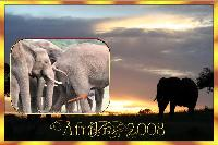 Afrika 2008