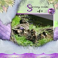 Spring Mum