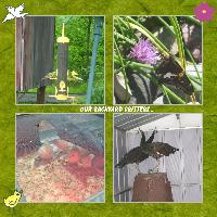 Our Backyard Critters