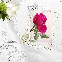 June 9 08 Rose