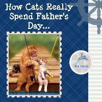 Cats Dad Day