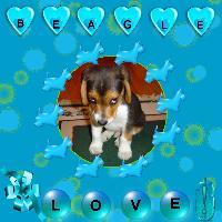WOOF!!! Challenge....Beagle