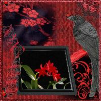 Crimson & Black