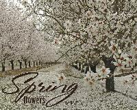 Bountiful Blossoms