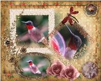 Hummingbirds Again