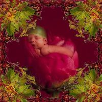 Rose Baby II