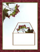 Red Maple stationary
