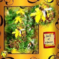 Bee's & Flowers