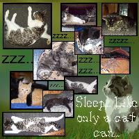 Sleep... like only a cat can...