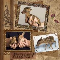 Teeny Tiny Little Deer