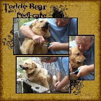 Teddy Bear gets a Pedi Care
