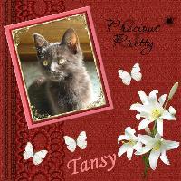 Tansy 2