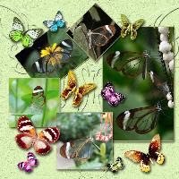 Colorful Butterflies Challenge