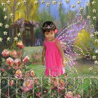 DD Fairy