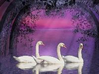 Swans Paradise