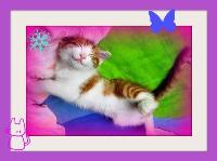 Pritty Kitty