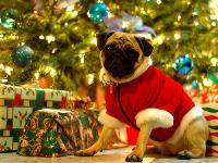 Puppy Clause