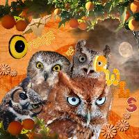 Orange and Owls