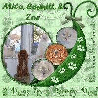 milo, emmit and Zoe...3 peas in a pod