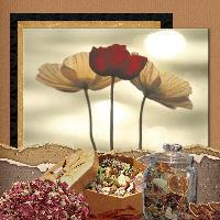 Potpourri and Poppies