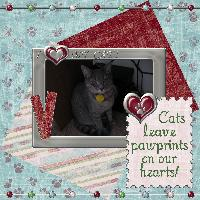 Cats leave Pawprints