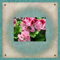 Floral Beauty1
