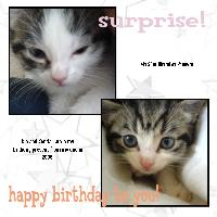 A surprise Present
