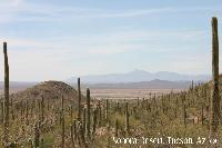 Sonora Desert :: Tucson, Az